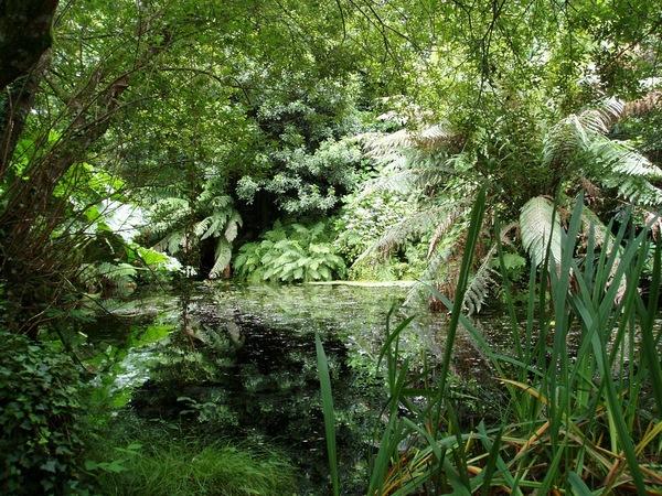 Penjerrick Garden Phil Beard