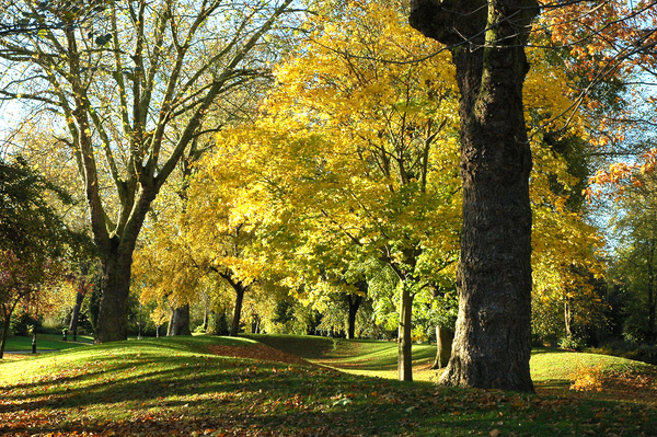 Derby Arboretum robertharris746@btin ternet.com