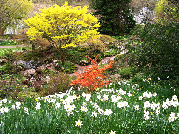 The Weir Garden mifl68