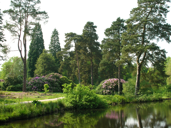 Bedgebury National Pinetum Dominic Torrisi