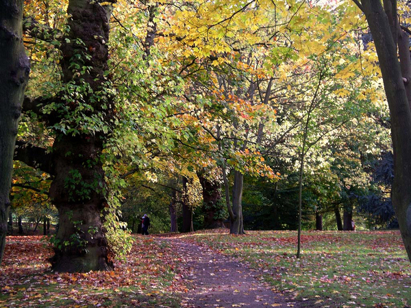Cannizaro Park wimbledonian