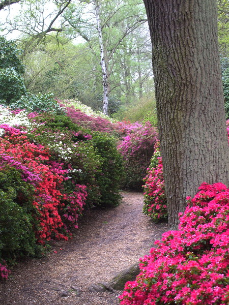 Isabella Plantation Garden ajth