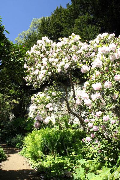 Belsay Hall Garden Gail