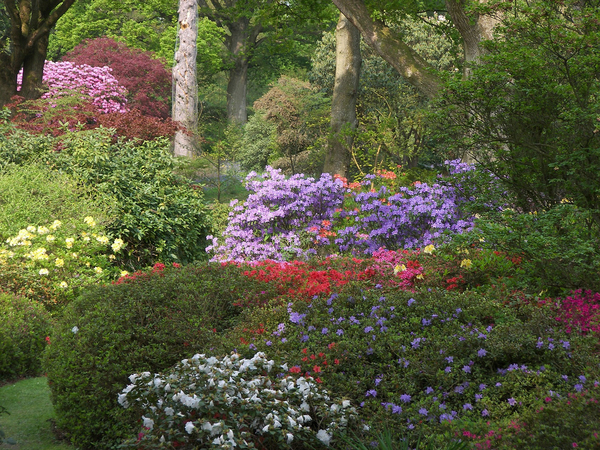 Ramster Garden Laurie Redstone