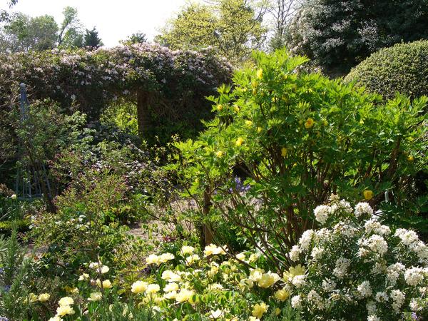 Denmans Garden denvilles_duo