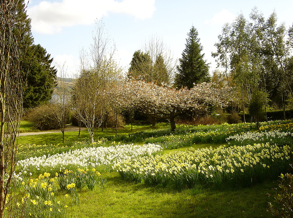 Crarae Garden Allan Ogg