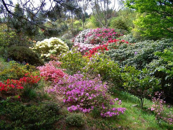 Glenwhan Garden jimrankin26
