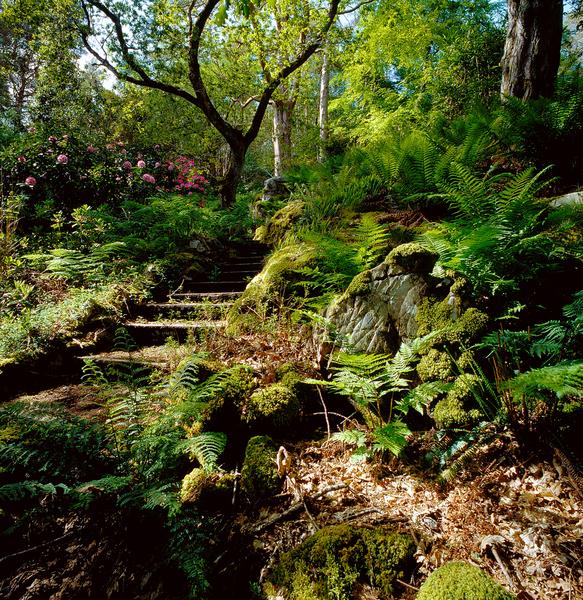 Lochalsh Woodland Garden NTS