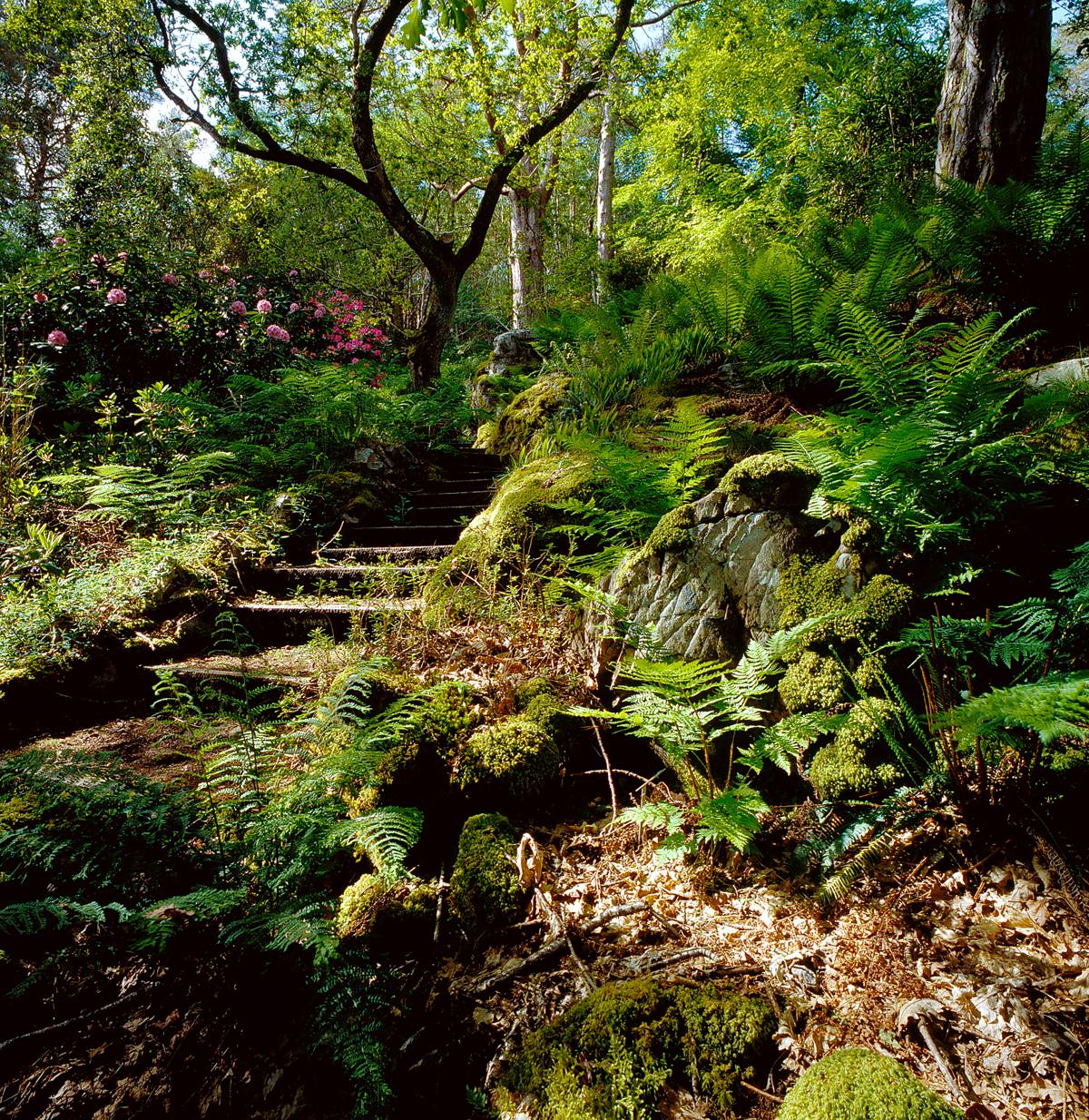 Shady Walkway Landscaping