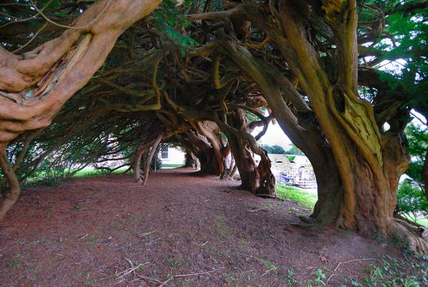 Aberglasney Gardens Nicholas Kaye
