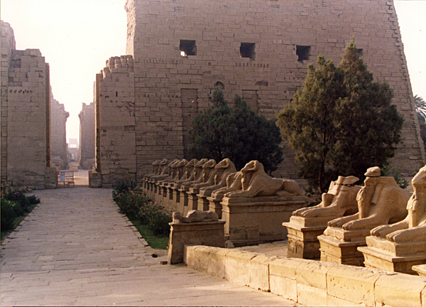 Temple of Luxor digital cat