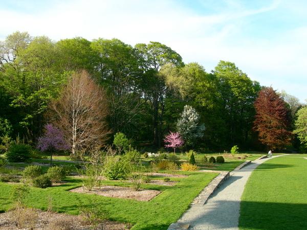 Arnold Arboretum Garden Chris Walton
