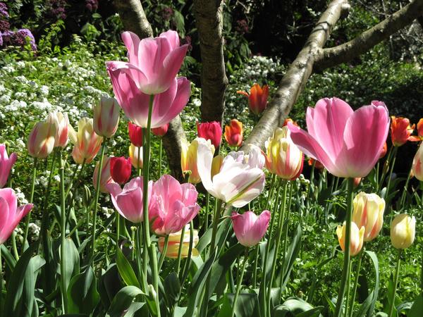 Royal Botanic Gardens Sydney cskk