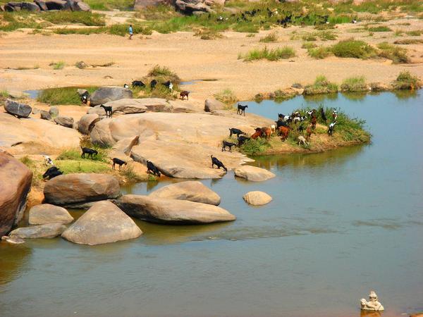 Vijayanagara Wm Jas