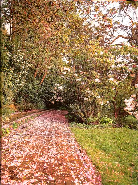 Dunn Gardens topsyturvystyle