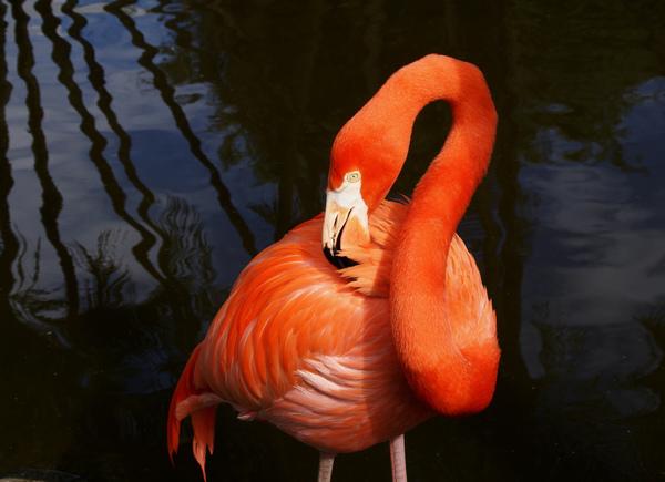 Flamingo Gardens Kenny P