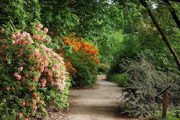 Botanische tuin Belmonte Fried Kampes