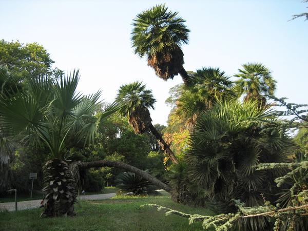 Jardin Thuret Christian