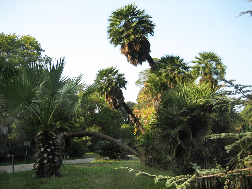 Jardin thuret for Jardin villa thuret antibes