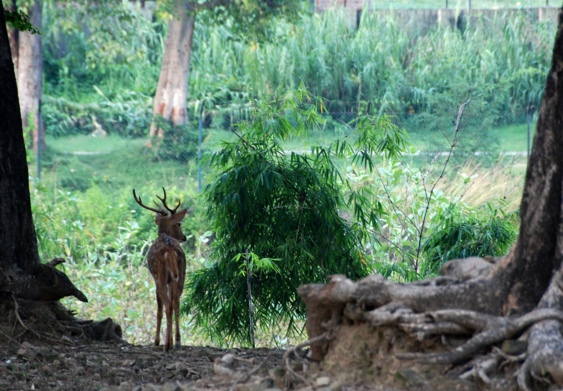 Sarnath Deer Park and Bo Tree Ajay Tallam