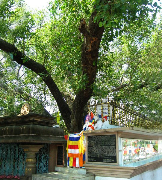 Sarnath Deer Park and Bo Tree Anna T