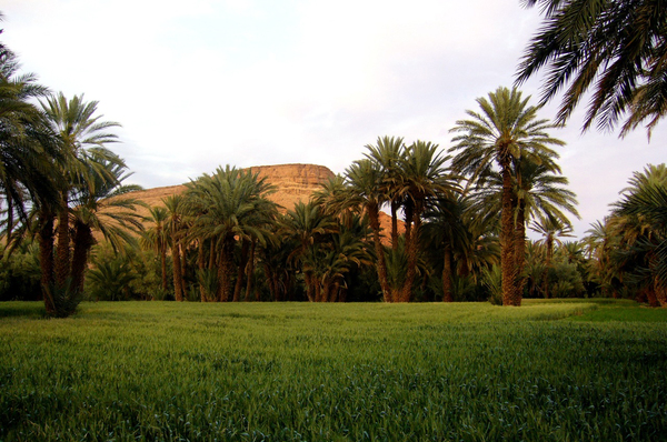 Palmeraie - palm garden Alexandre Baron