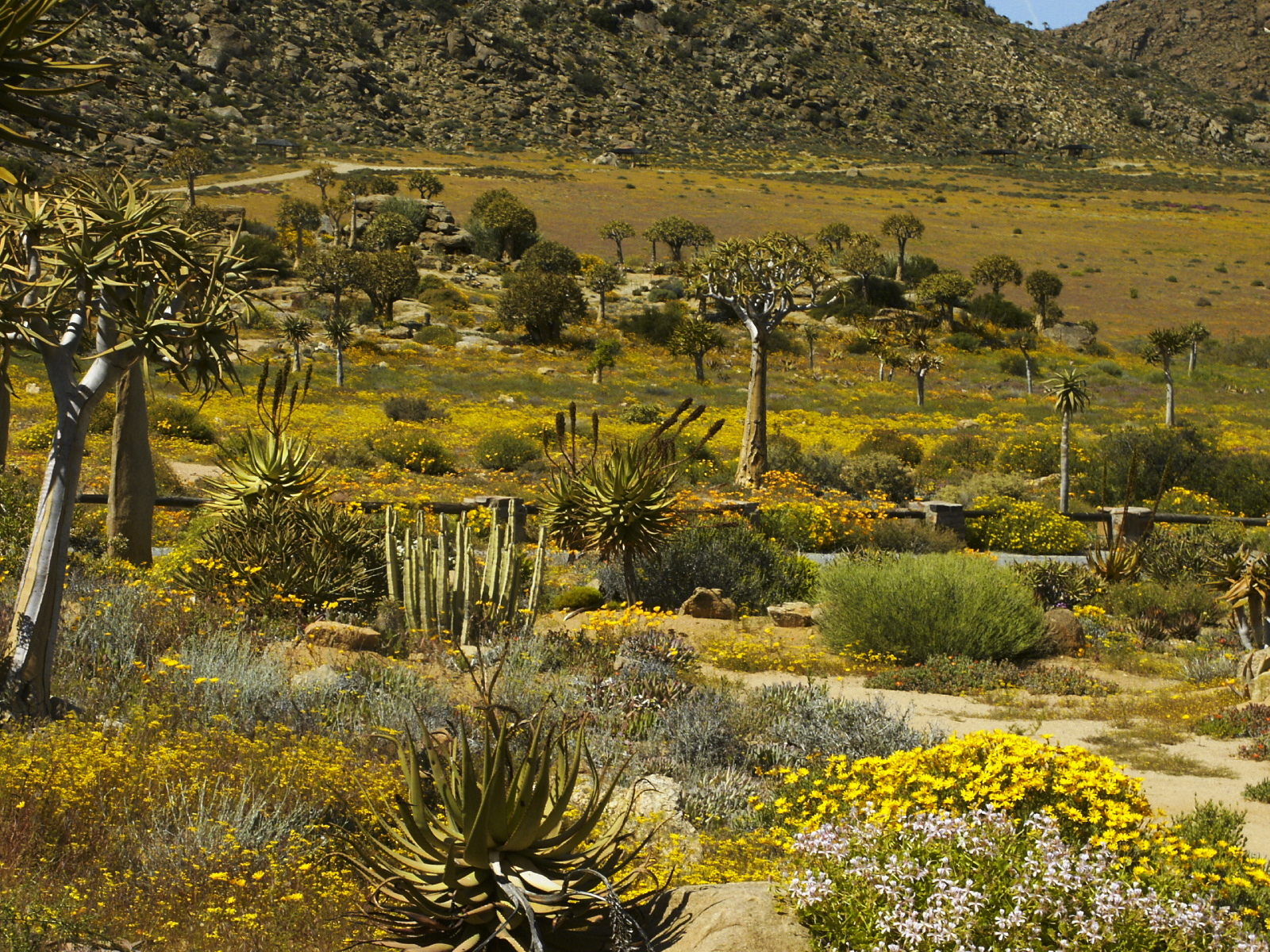 Hester Malan Wildflower Garden Wikimedia