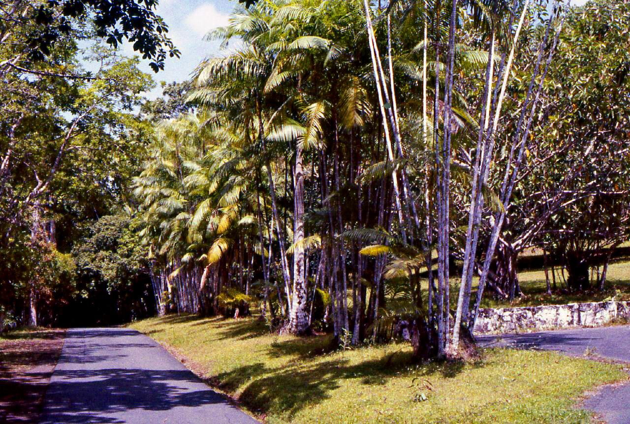 Summit Botanical Garden