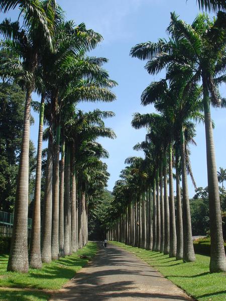 Peradeniya Botanic Gardens Leon Meerson