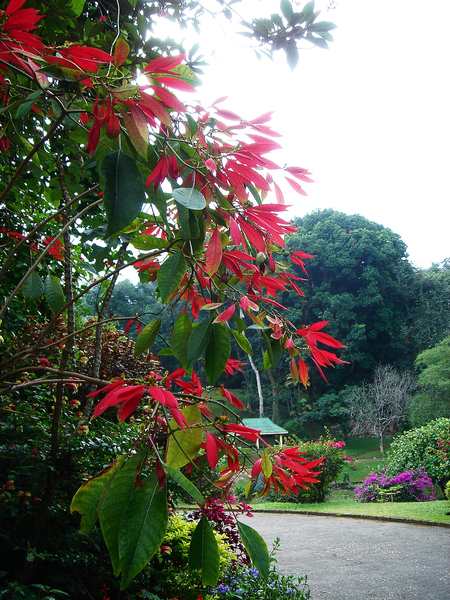 Peradeniya Botanic Gardens Michael Renner