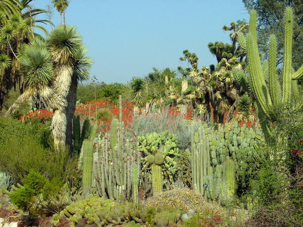 Huntington Botanical Gardens, California