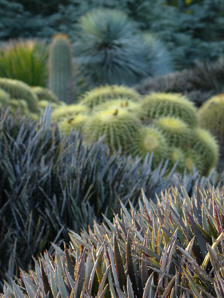 Cacti, Huntington Botanical Gardens