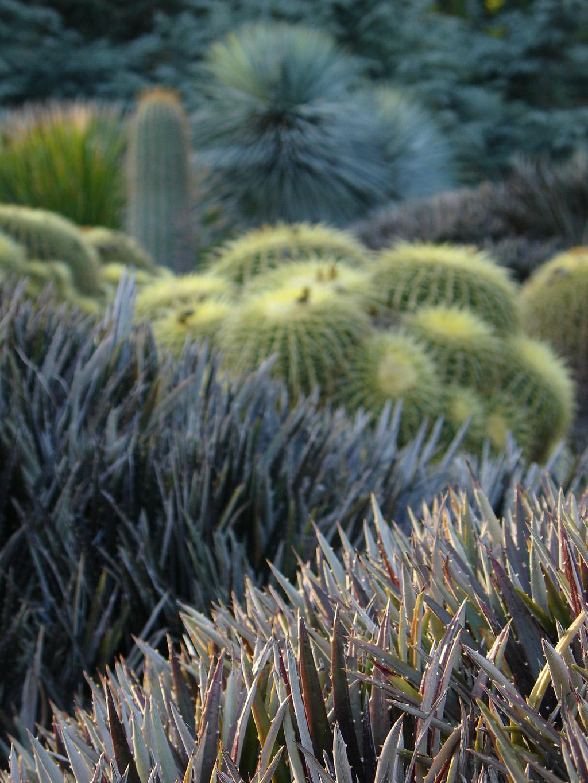 Cacti, Huntington Botanical Gardens