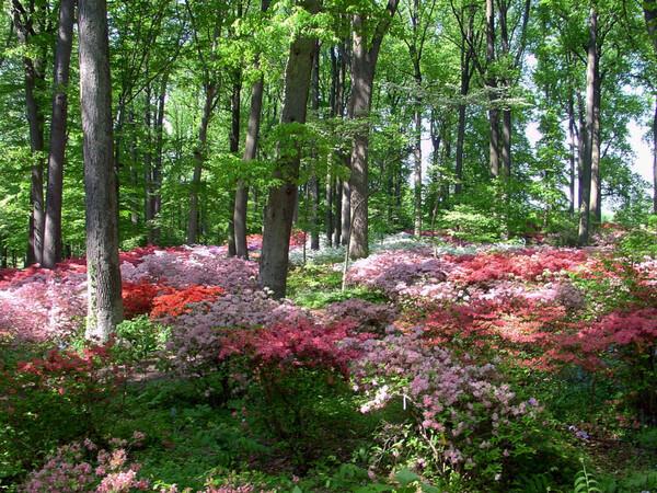 Winterthur Garden, DE