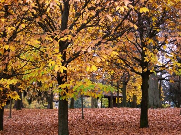 Autumn, Schlosspark Bad Homburg
