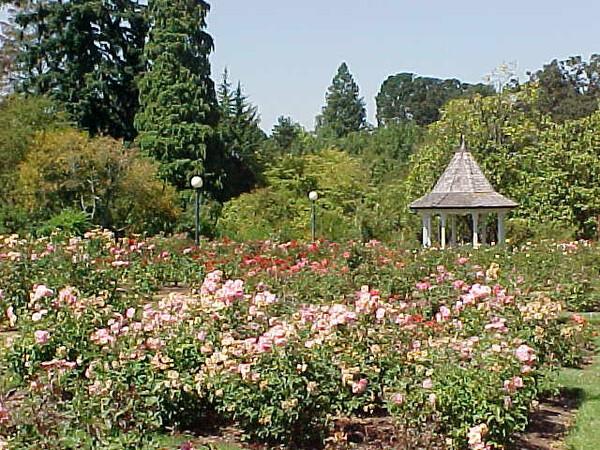 Bush's Pasture Park, Rose Garden