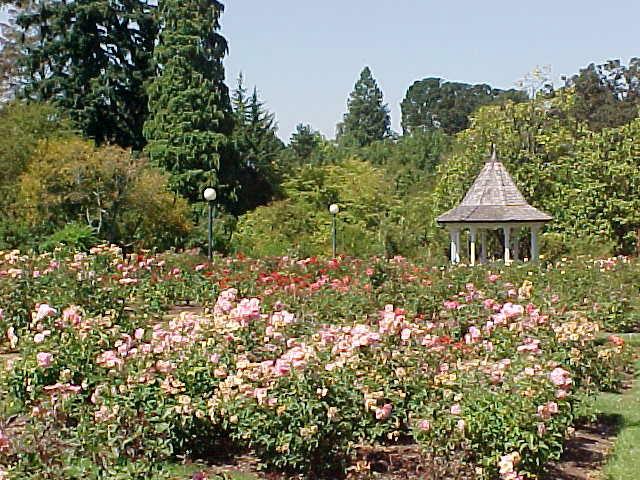 Bushu0027s Pasture Park, Rose Garden