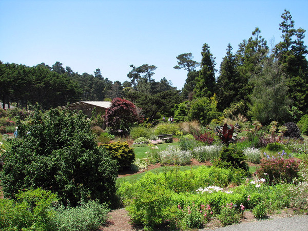 Mendocino Coast Botanical Garden, California