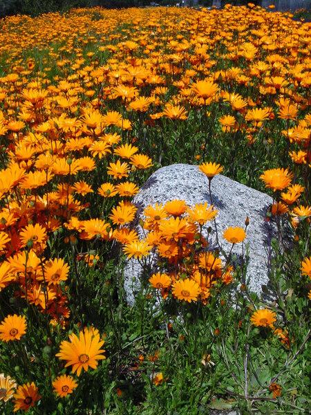 Rancho Santa Ana Garden, CA