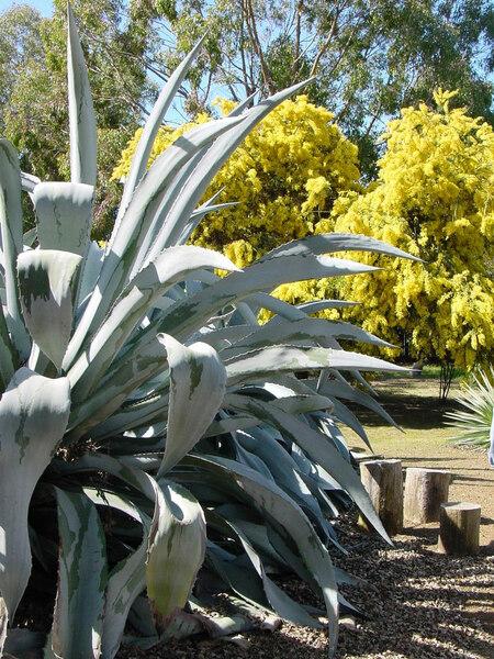 Ruth Bancroft Garden, CA