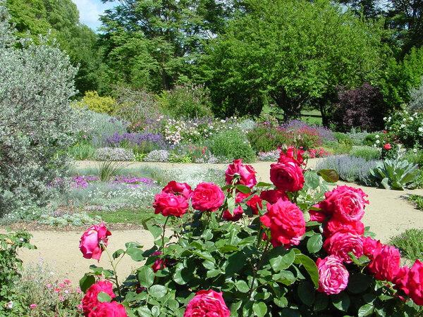 Roses, Davis Arboretum