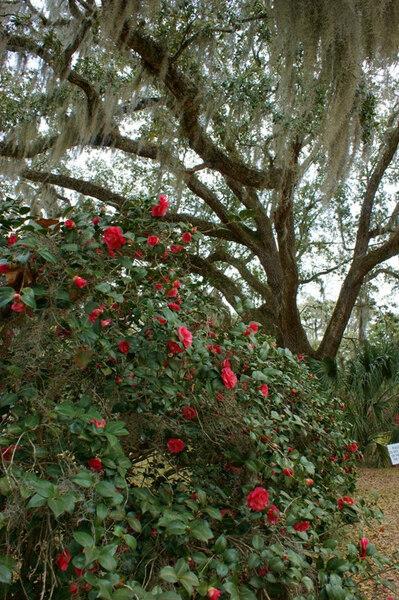 Goodwood Museum & Gardens, Florida