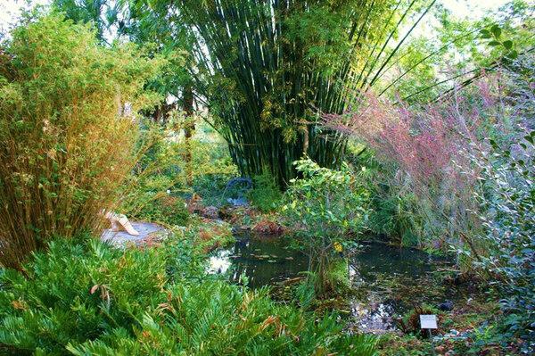 Weaver's Bamboo, Kanapaha Botanical Gardens