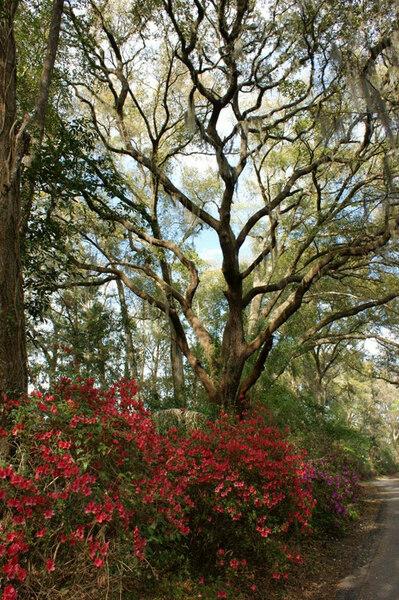 Ravine Gardens State Park, Florida