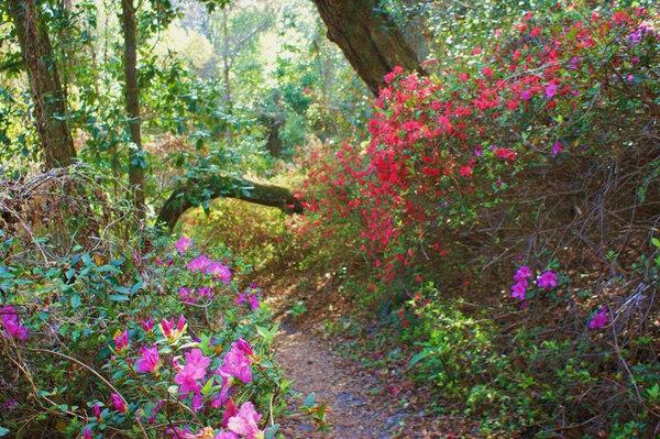 Ravine Gardens State Park, USA