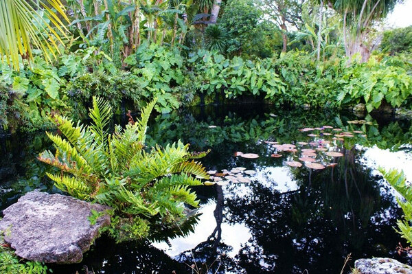 Pond, Fairchild Tropical Botanic Garden