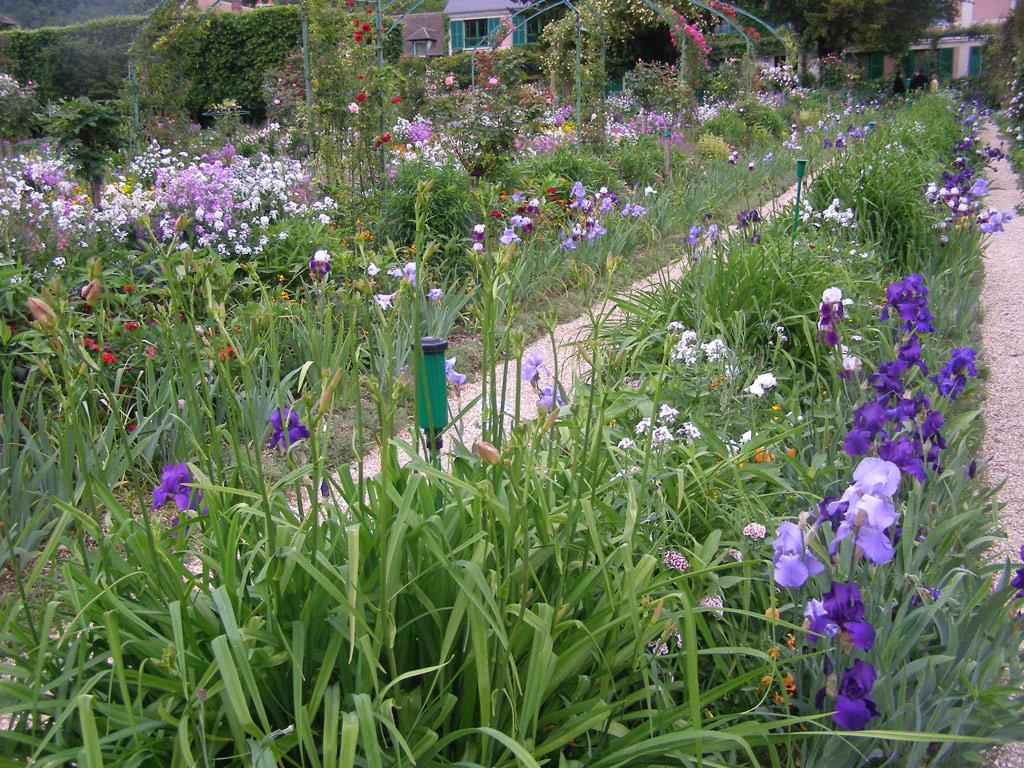 Claude Monet The Iris Garden At Giverny Information Garden Ftempo