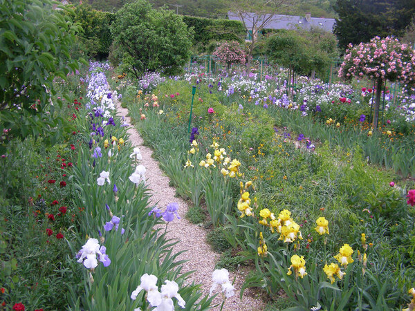 Irises, Giverny Garden