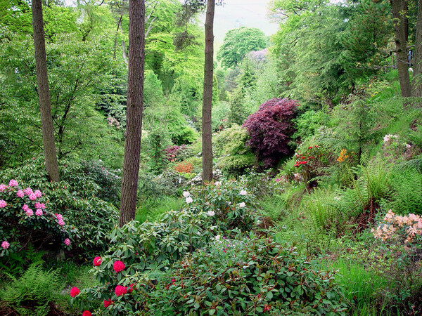 Dunge Valley Rhododendron Gardens