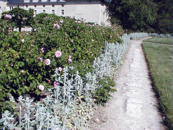 Roses, Abbaye Royale de Fontevraud
